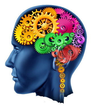 14 Key Principles Of Brain Based Learning Academia De Julia Victoria